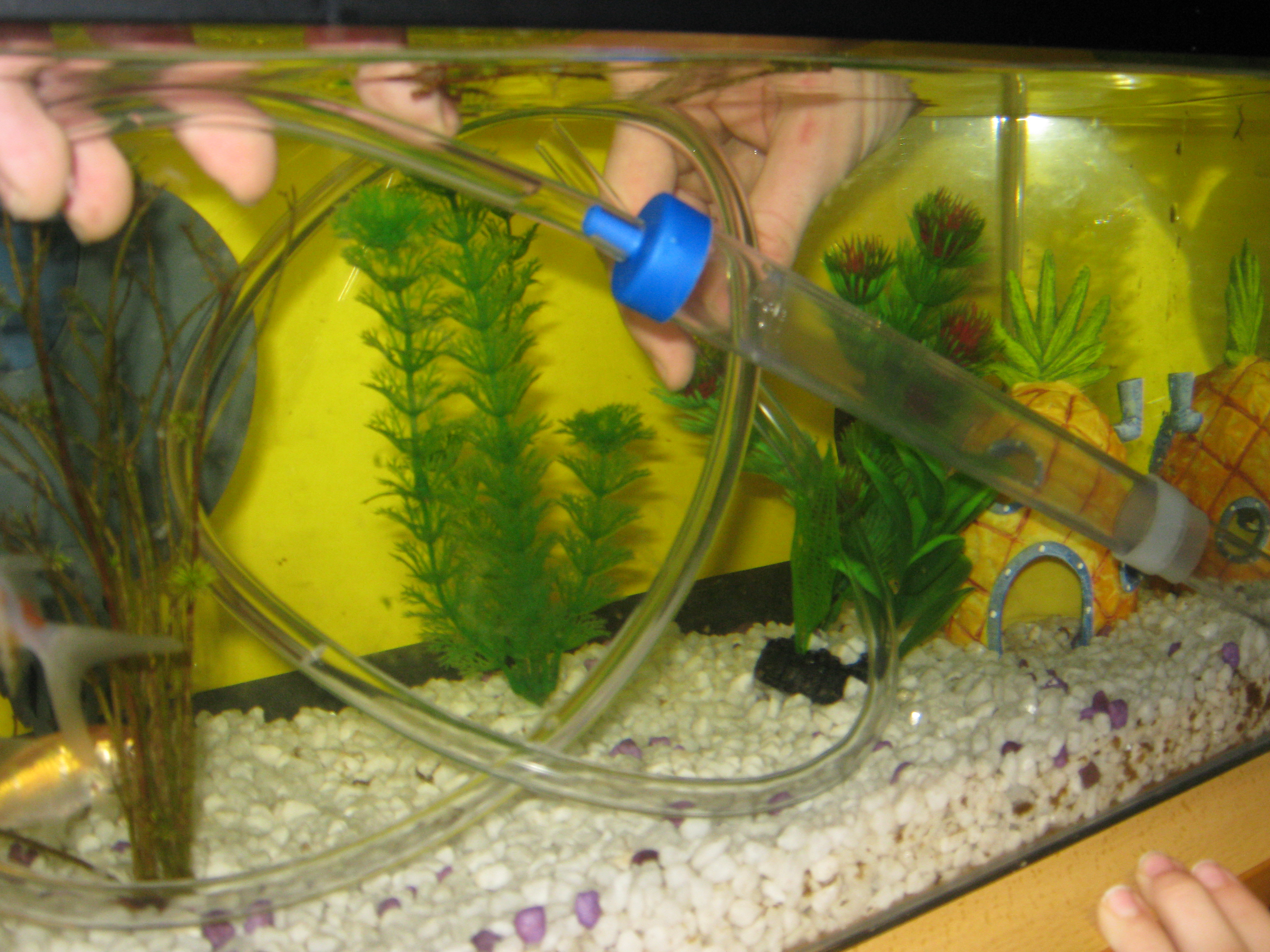 Cleaning the fish tank class 4oq 39 s blog for How to clean fish tank filter